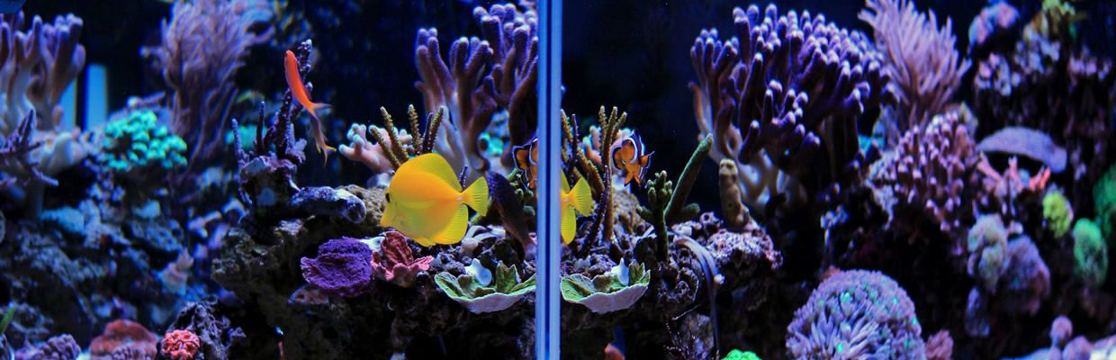 saltwater-reef-aquarium-rotator-short